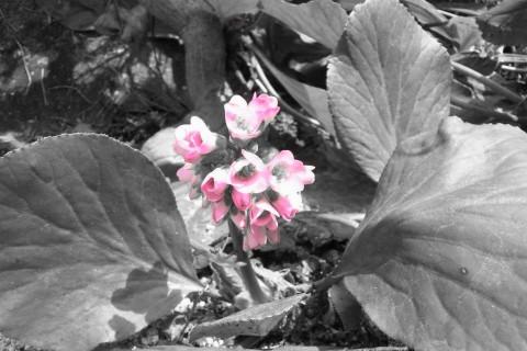 C360_2012-04-15-13-13-01.jpg